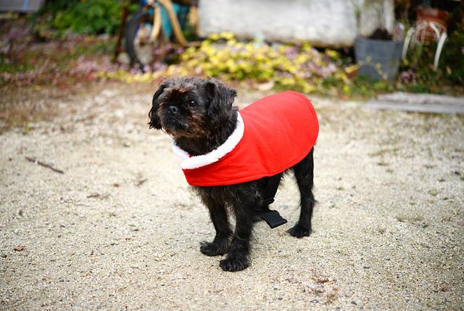 ピザ屋「cosi-cosi(コジィコジィ)」さんの看板犬